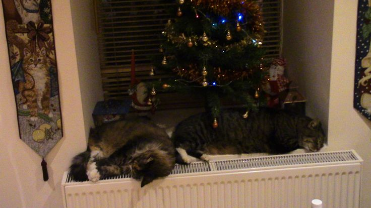 Cats finding their natural snooze spot. Minnie and Cooper doing what comes naturally.