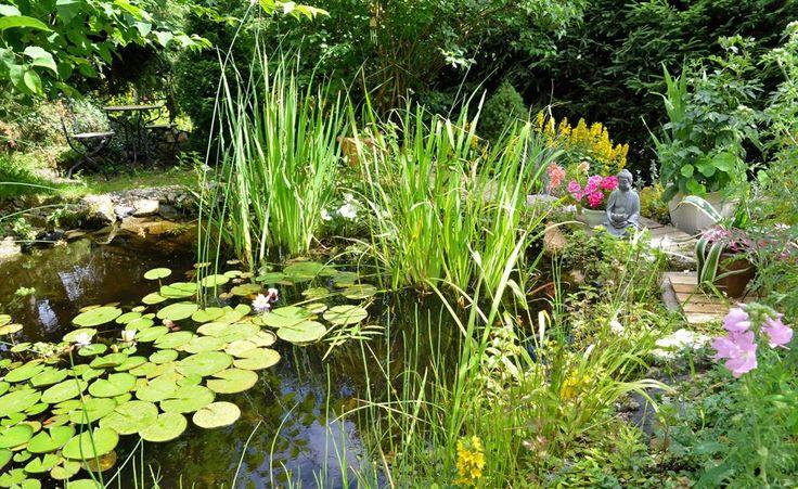 105 besten wassergarten bilder auf pinterest g rtnern naturschwimmb der und wasserspiele. Black Bedroom Furniture Sets. Home Design Ideas