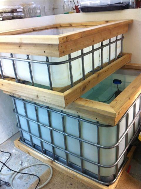 17 best images about aquaponics hydroponics on pinterest for Hydroponic fish tank diy