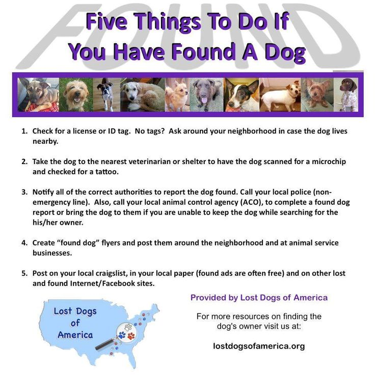 24 best If you find a lost dog images on Pinterest Animal rescue - lost dog flyer examples