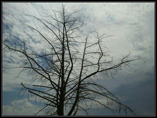 Con un #albero si possono fare milioni di fiammiferi...ma basta un fiammifero per bruciare milioni di #alberi.