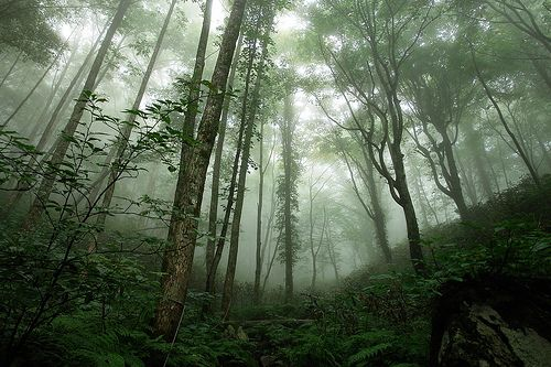 World Natural Heritage in Japan Shirakami 世界遺産(らしい)白神山地 by mariposa.03, via Flickr