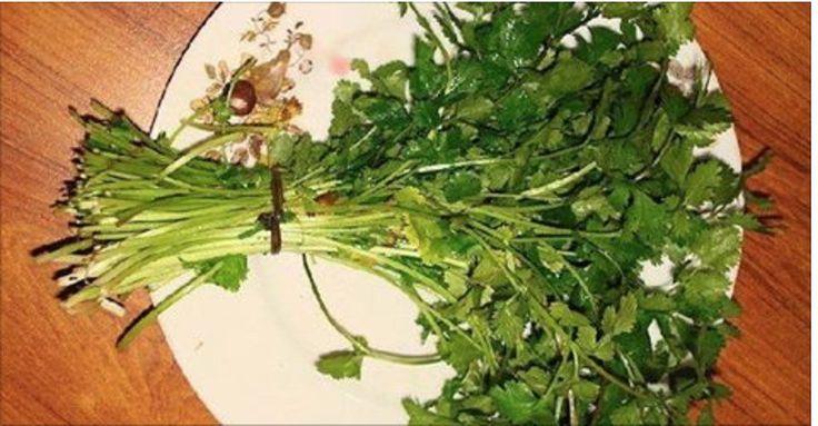 O coentro é um tempero muito usado na cozinha.Mas você sabe quais são os benefícios dele à saúde?Além do agradável aroma, essa erva dá um sabor especial aos alimentos.