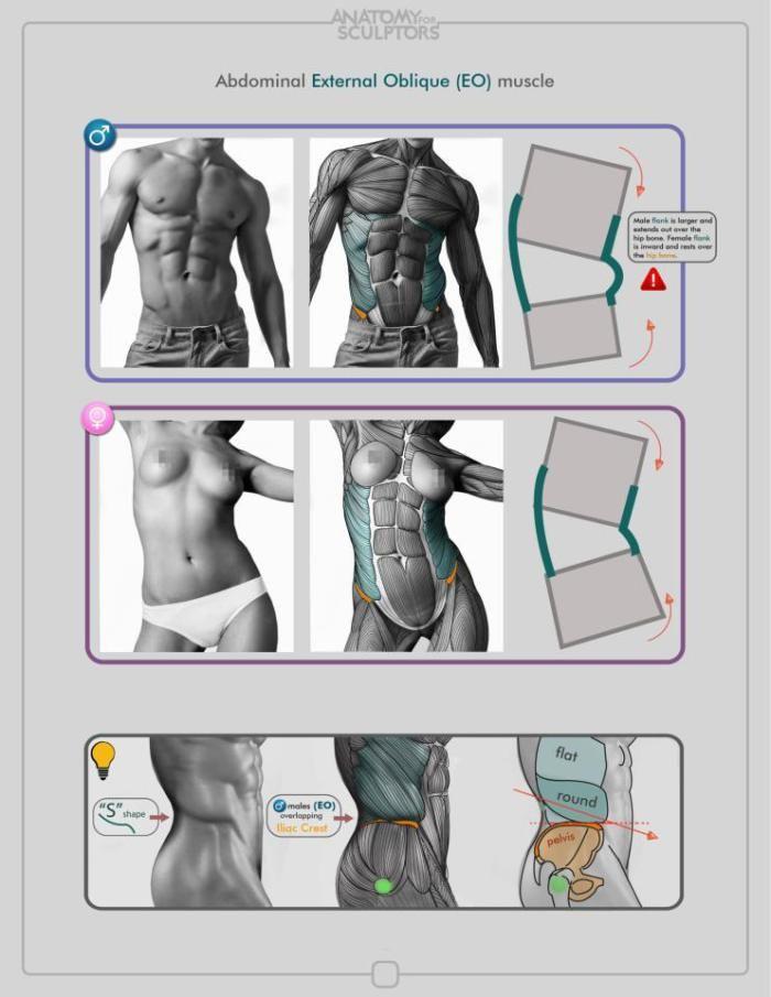 anatomy for the artist sarah simblet pdf