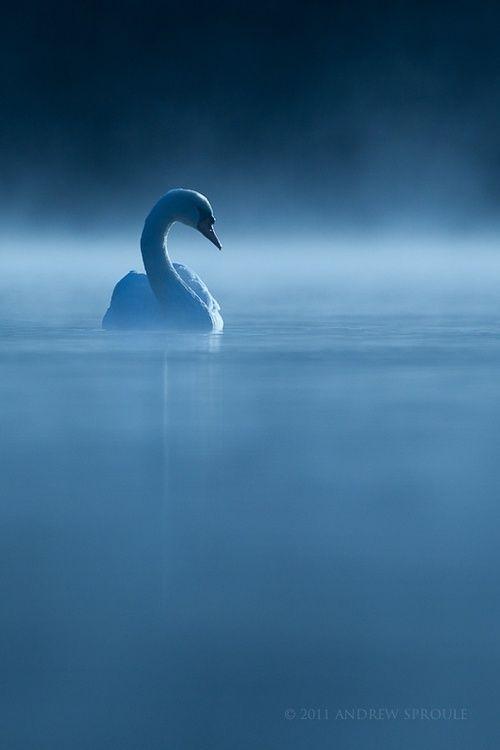 Ceda nadando en el lago. La Espada Sagrada.