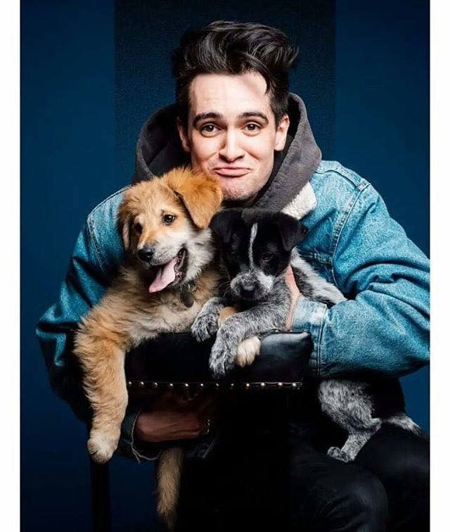 Cute Wallpaper For Laptop Windows 8 Brendon Urie Puppy In 2019 Brendon Urie Cute Cool Bands