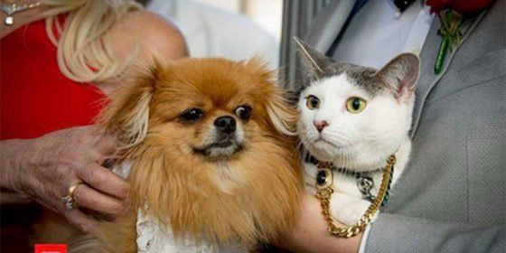 Cat and dog get married on Real Housewives to fight for same-sex marriage in Australia