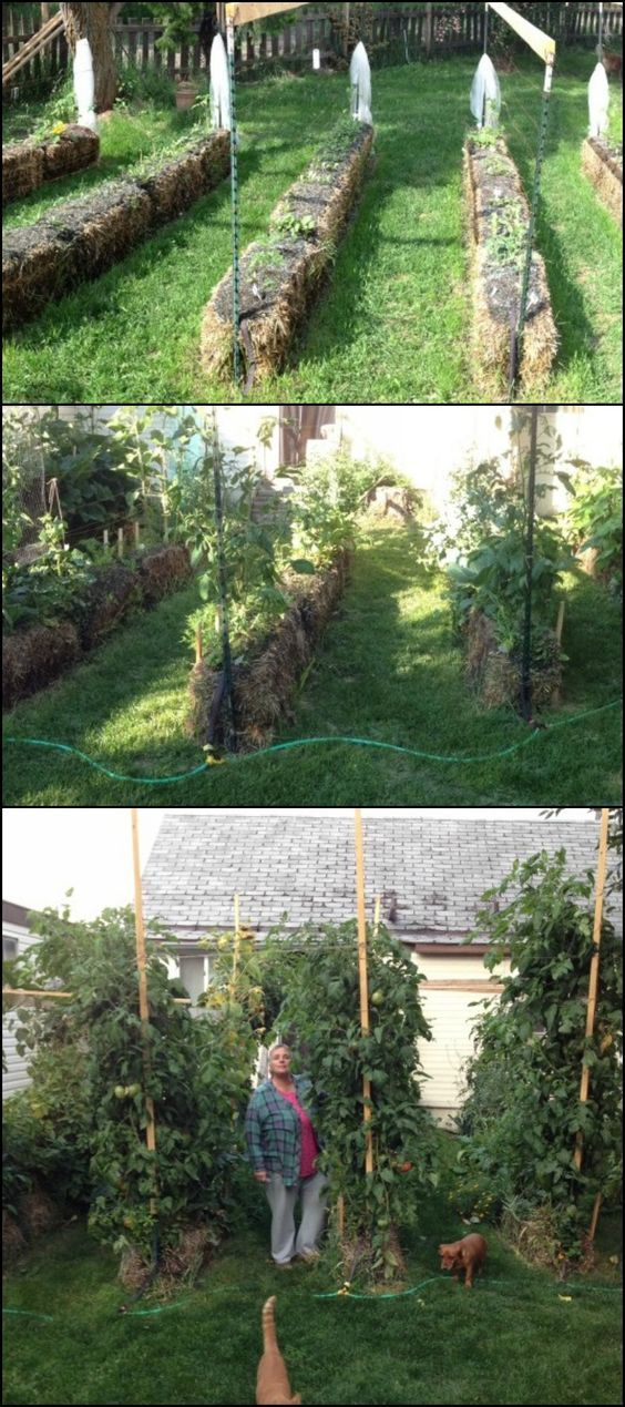 How to Grow a Straw Bale Garden diyprojects.ideas... Can't grow plants and vegetables because critters keep eating them? This simple gardening idea might just be the solution for you! This is also better than the usual garden in a number of ways. Learn more and see how easy gardening is with this tutorial. :) #strawbale #garden