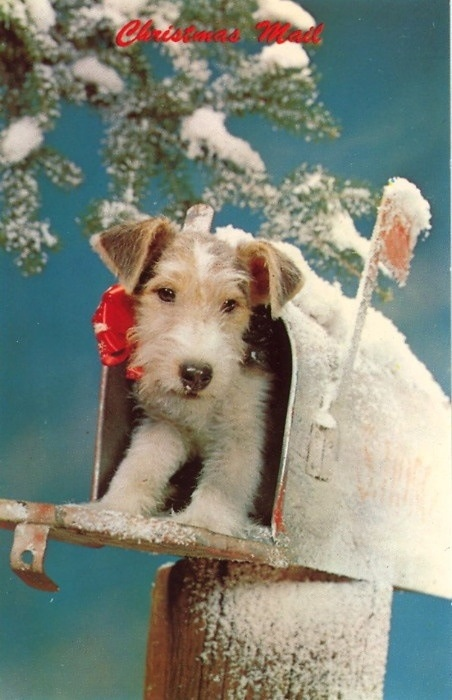 1000 Images About Wire Fox Terrier On Pinterest