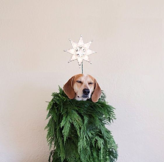 Faux Christmas Tree -  Dog Christmas Cards Ideas For Anyone Who's Obsessed with Their Pup  - Photos #DogChristmas
