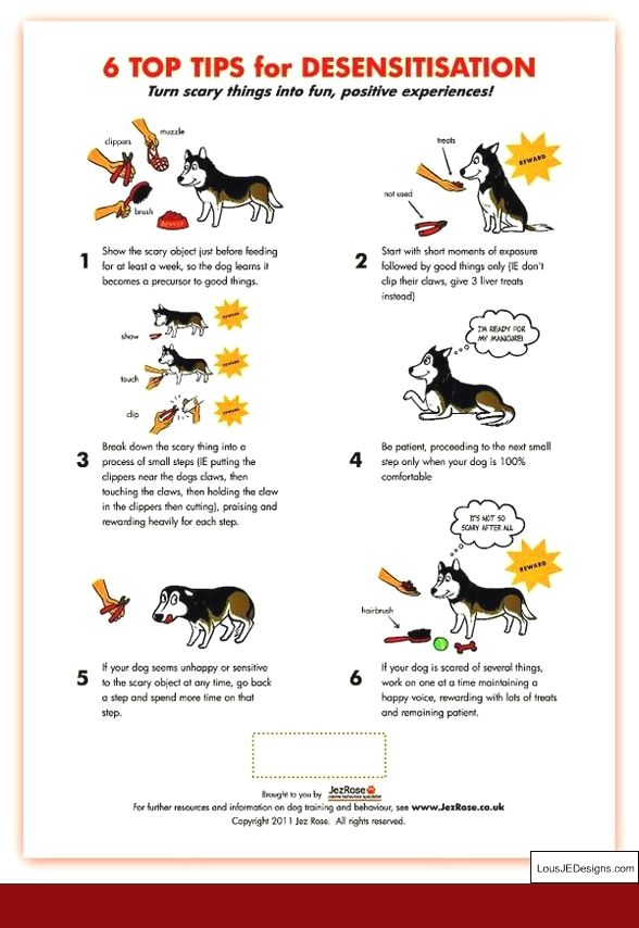 Dog Training Tips For Retrieving And Pics Of Teaching A Dog To