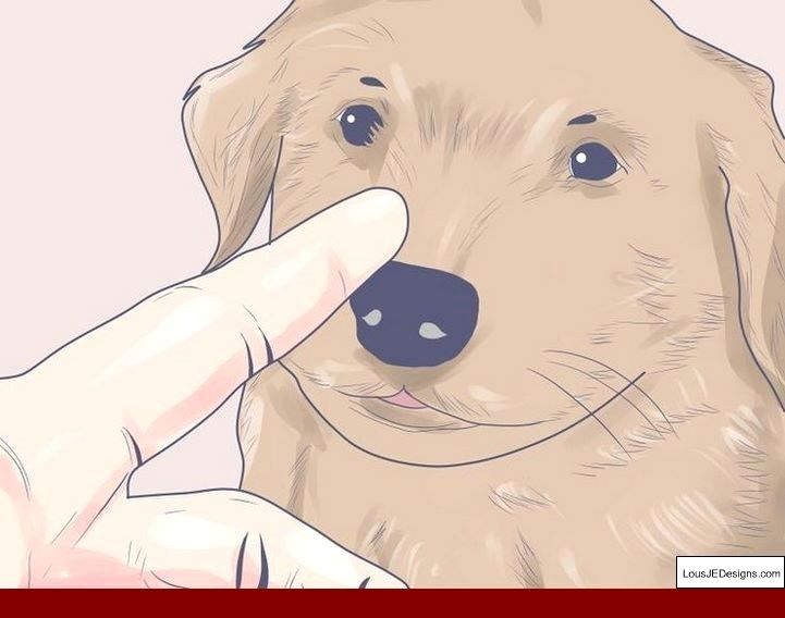 How To Train A Dog Not To Bark At Other Dogs On Leash And Pics Of