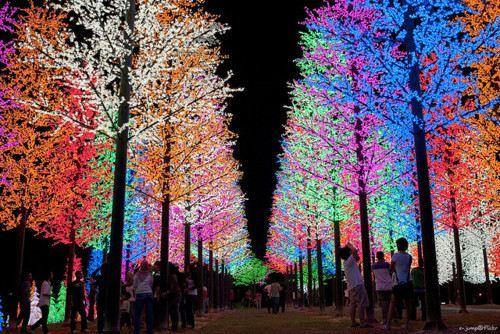 multi coloured trees