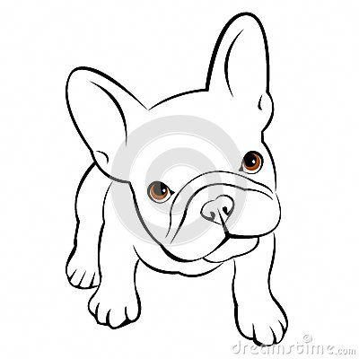 Everything About The Adaptable French Bulldog Dog Health #