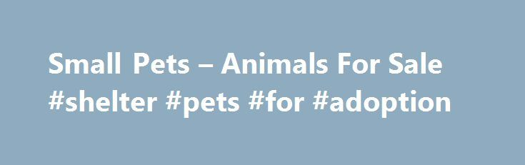 Small Pets – Animals For Sale #shelter #pets #for #adoption http://pet.remmont.com/small-pets-animals-for-sale-shelter-pets-for-adoption/  Live Small Animals small pets & animals for sale   small pet store Browse our small animals and discover the joy of bringing home one of the many pets for sale at your local Petco store. Depending on where you live, this large selection of small pets for sale can vary, so make sure to call your store ahead of time to determine which critters are currently…