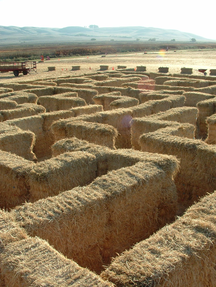 <3 Hay Maze...great one on a farm off highway one just past Half Moon Bay...