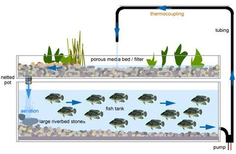 Aquaponics: how to build an #aquaponics system. Start growing your own organic food.