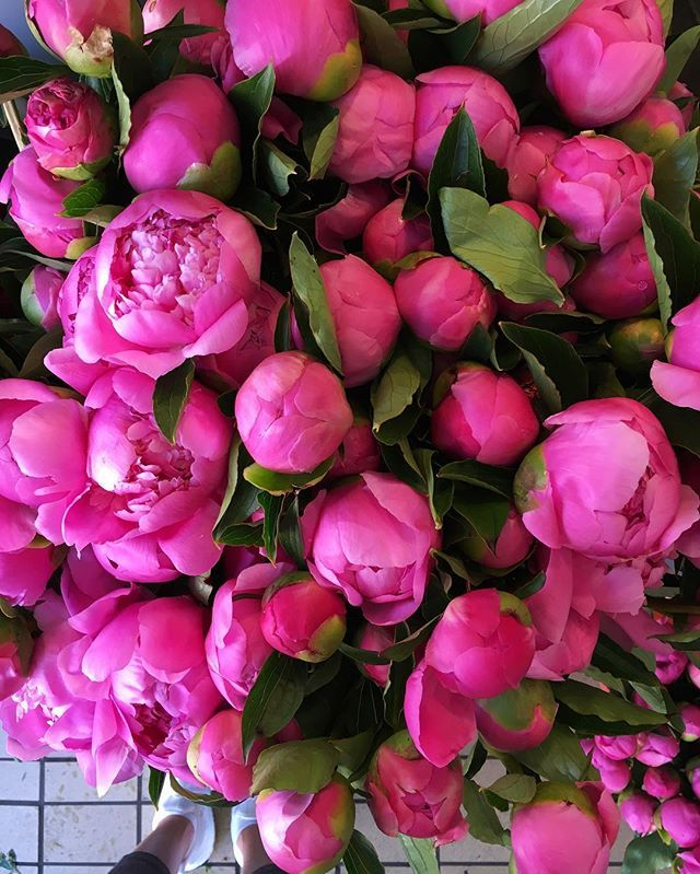 Peonies Season 132 best peony images on pinterest | peony, friends family and flowers