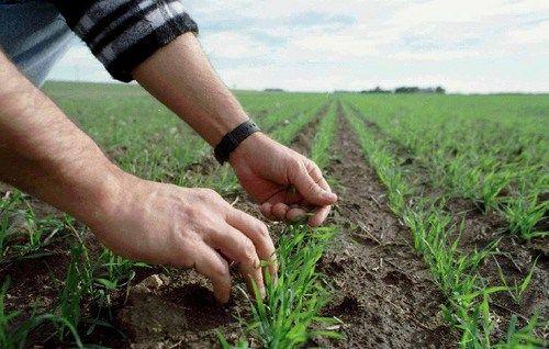 Inició siembra de arroz para semilla en Portuguesa Pdvsa Agrícola inició la siembra de 1.000 hectáreas de arroz para semilla en dos de sus Unidades de Producción ubicadas en el municipio Ospino, del estado Portuguesa.  Twittear  http://wp.me/p6HjOv-2Vu ConstruyenPais.com