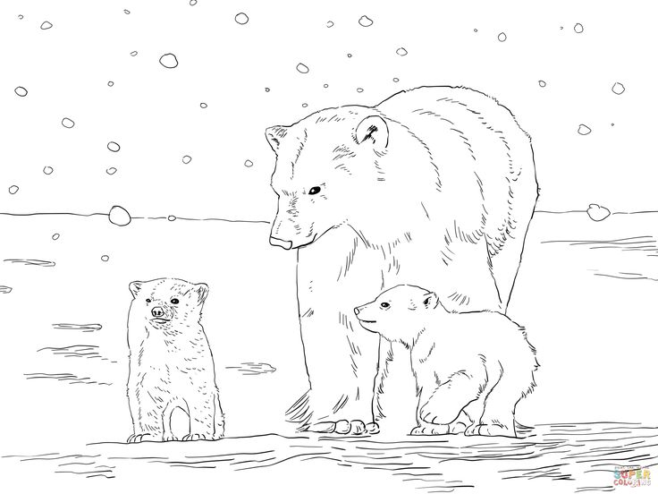 Polar Bear Cub Pattern Coloring Coloring Pages