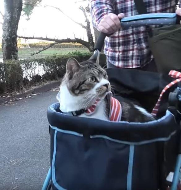 ペットキャリーで公園へお散歩に来た猫 外の景色に興味津々 ねこのきもちweb Magazine ペットキャリー ペット 猫