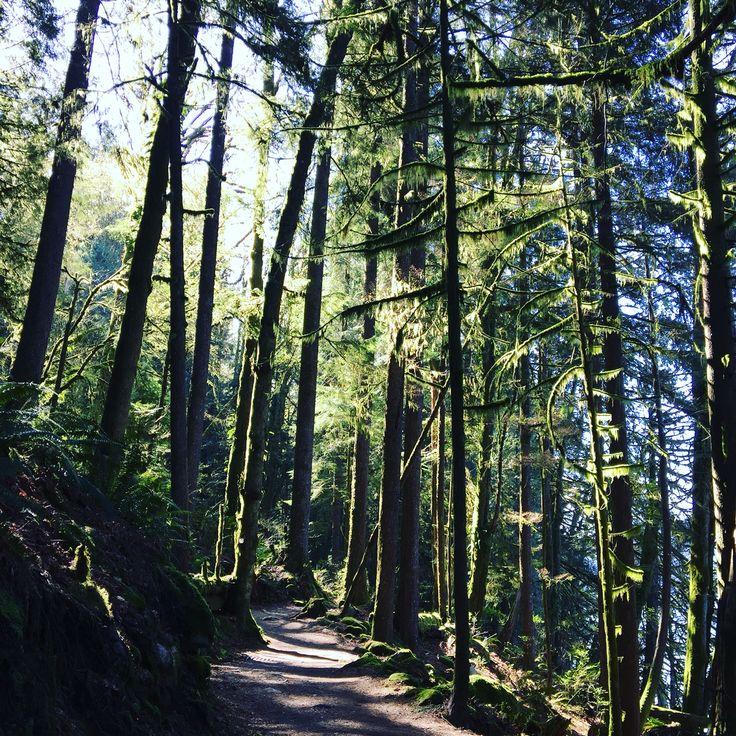 Trail running, Port Moody, BC Canada