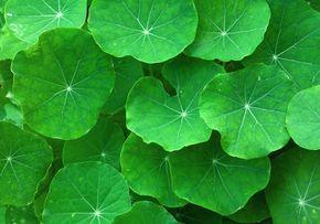4 potężne zioła regenerujące mózg – wskazówki dla osób z alzheimerem i parkinsonem