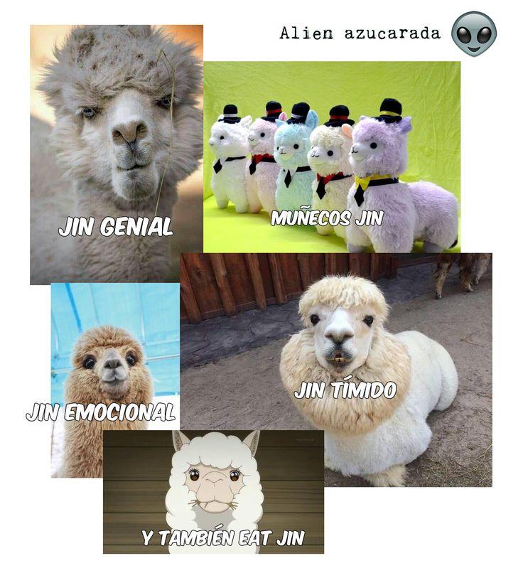 Jin Alpacas