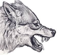 Image result for wolf head drawing side                              …