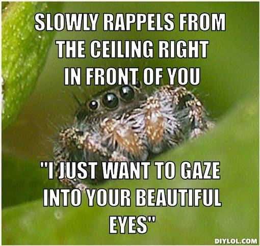 I'm terrified of spiders but maybe its because I misunderstand them. #misunderstoodspider