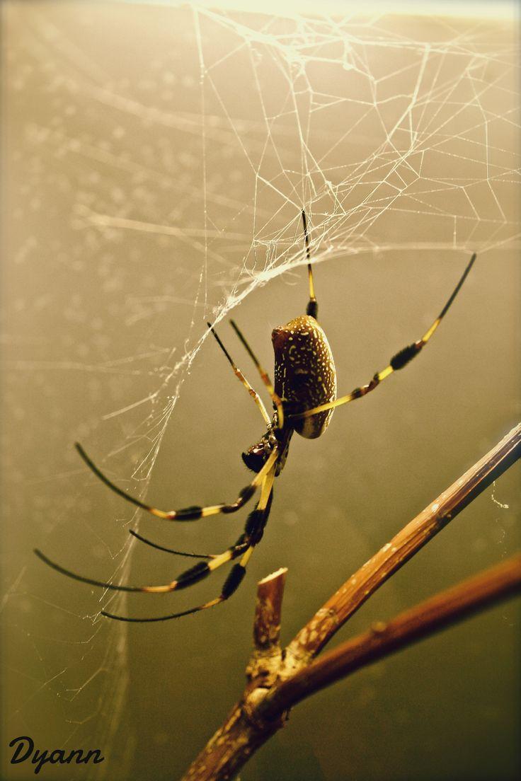 270 best spiders images on pinterest spider webs garden spider