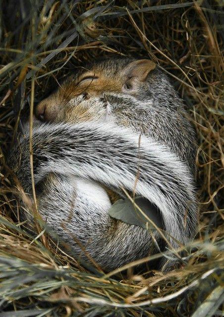 Baby Squirrel Sleeping