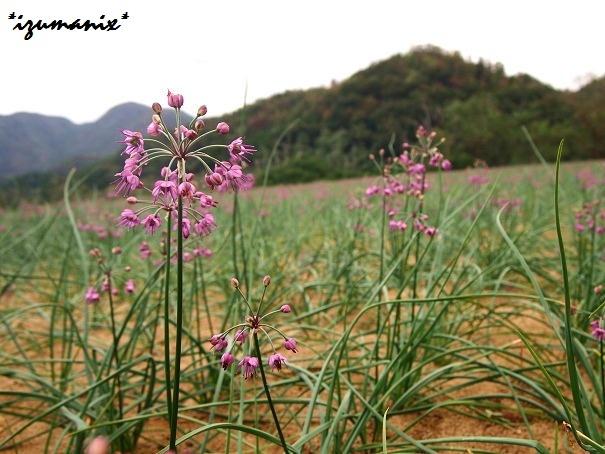 @鳥取(Tottori)
