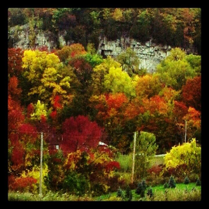 Crisp fall colour