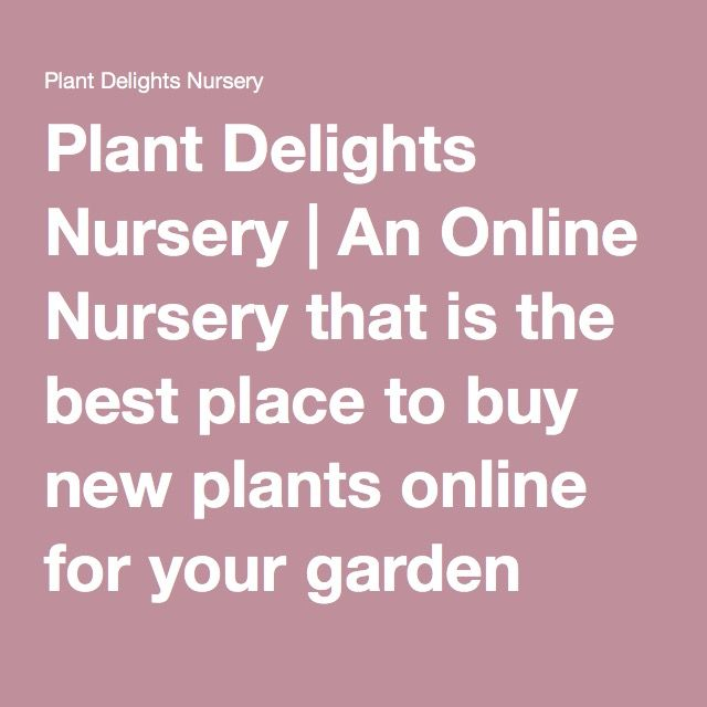 Plant Delights Nursery | An Online Nursery that is the best place to buy new plants online for your garden