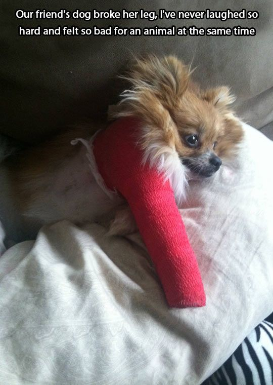 that happened to our dog but she wouldnt stop eating the cast off... so we put our dog, pepsi, in the cone of shame