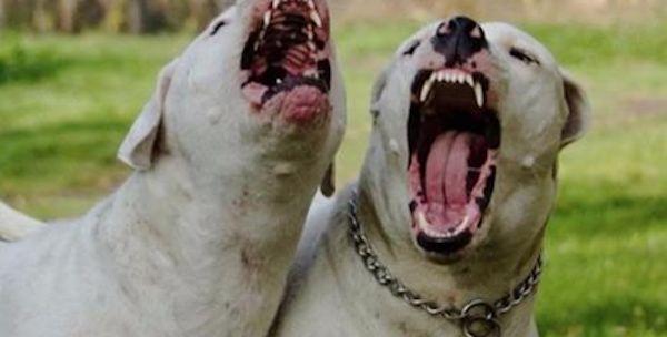 DRAMMA NEL PESCARESE: BIMBO DI 2 ANNI SBRANATO DA UN CANE - http://www.sostenitori.info/dramma-nel-pescarese-bimbo-2-anni-sbranato-un-cane/260420