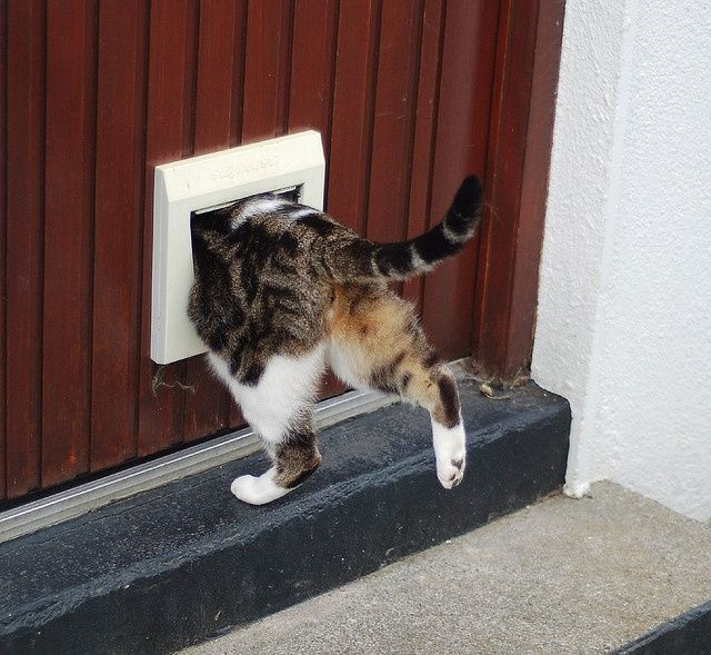 ... Newton was experimenting with light in a darkened room and one of his most prized cats (reportedly named \u201cSpithead\u201d) kept opening the door ... & 125 best Animals \u2022 Cat door \u2022 Dog door.. images on Pinterest ... Pezcame.Com