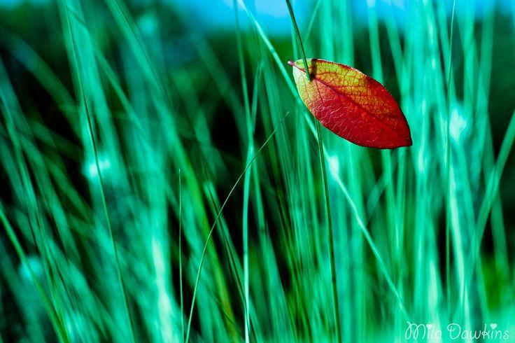 Lonely leaf by Mila Dawkins on 500px