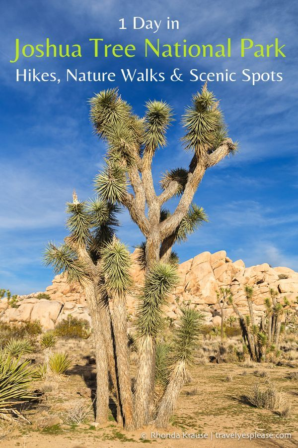 One Day in Joshua Tree National Park- Hikes, Nature Walks and Scenic Spots