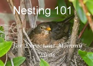 Guest Post: Nesting 101 For Expectant Mommy Birds