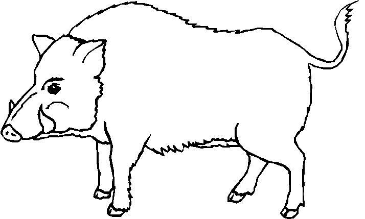IMAGINI cu ANIMALE salbatice de colorat | Fise de lucru - gradinita