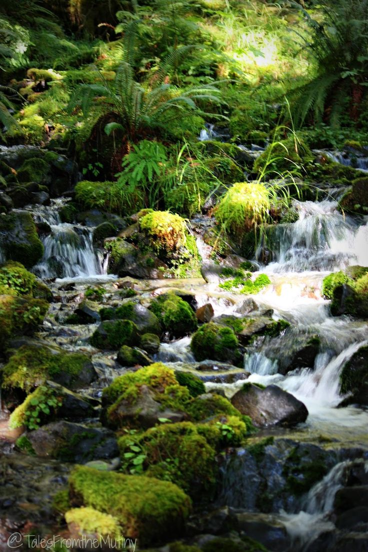 Tales From the Mutiny: Hiking in the Rain Forest of Hoh ~ Olympic National Park