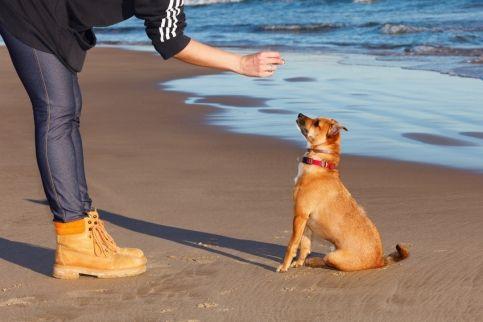 Image illustrant Améliorer l'obéissance de son chien