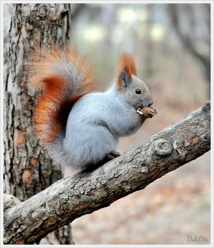 Neat looking squirrel!