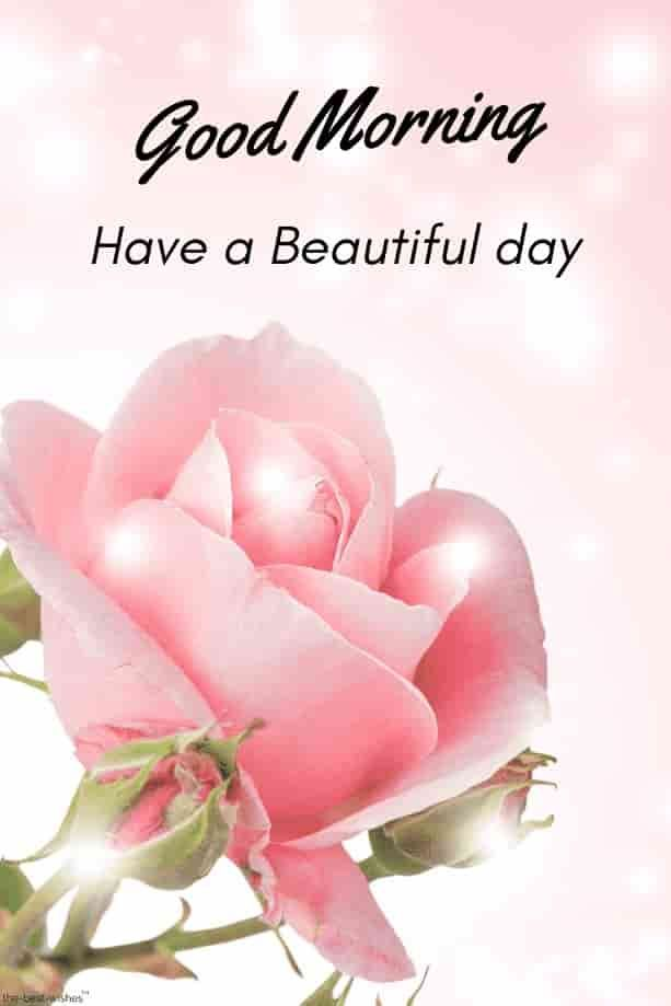 Hd Picture Of Good Morning With Shining Pink Rose Good Morning