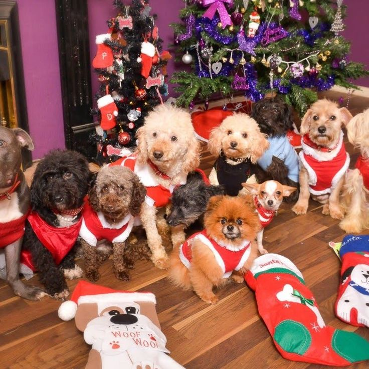 Merry Christmas! Many blessings to you and your loved ones   Feliz navidad! Muchas bendiciones para ustedes y vuestros seres queridos  Joyeux Noël! En espérant que vous recevrez des nombreuses bénédictions