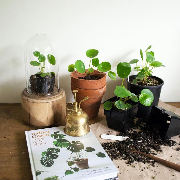 Incredible plant inspiration in the new @mrkitly indoor plants book. Such swoon-worthy scenes. A girl can dream!  By Hearth Collective.