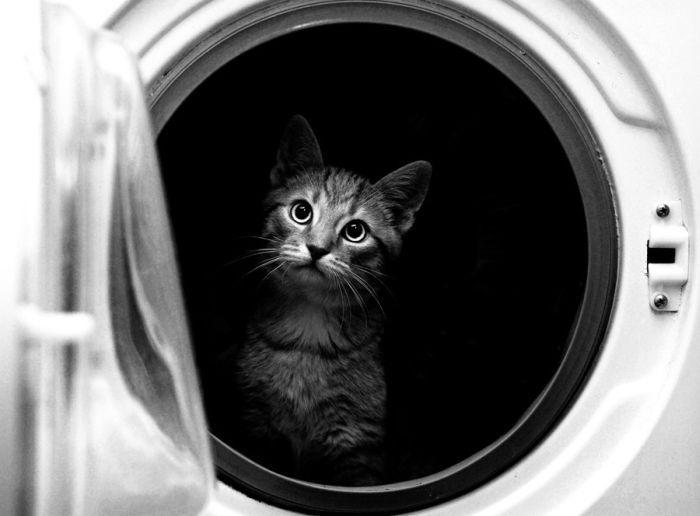 gatos_2