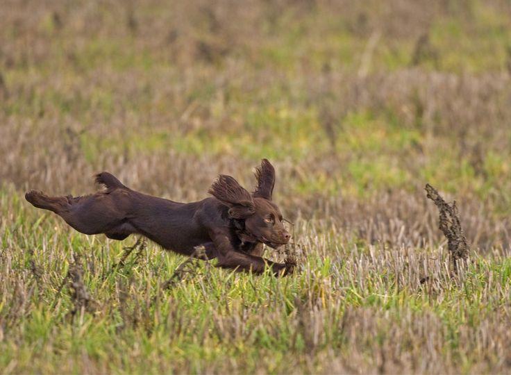 Der Jagdtrieb steckt in der Natur des Hundes und sorgt im Familienalltag oft für Probleme. Wie klappt die Abgewöhnung? Wir zeigen es Ihnen. Ein Ratgeber
